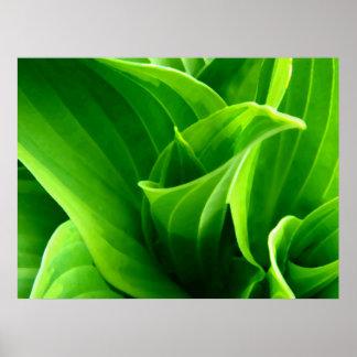 Green Hosta Poster