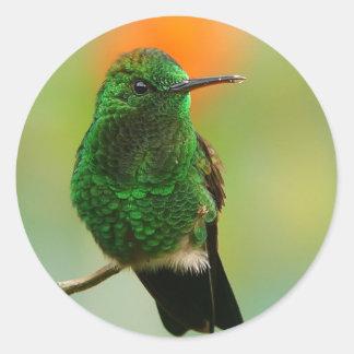Green Humming-Bird Sticker