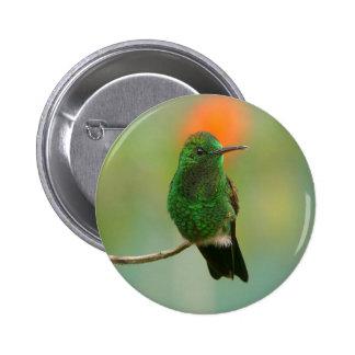 Green Hummingbird Button