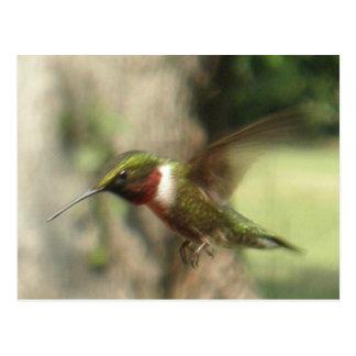 Green Hummingbird in Flight Wildlife Photo Postcard