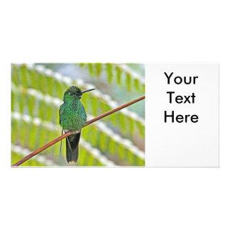 Green Hummingbird Photo Card