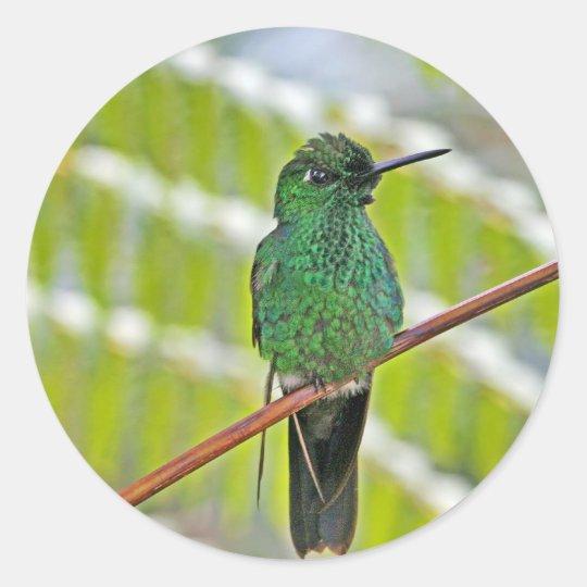 Green Hummingbird Photo Classic Round Sticker