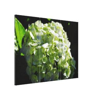 Green Hydrangeas Flowers Canvas Print