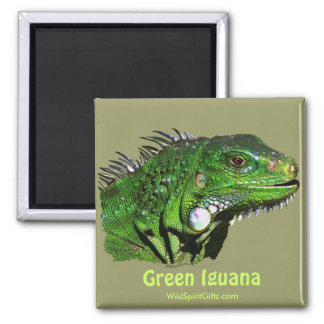 Green Iguana Collection 2 Inch Square Magnet