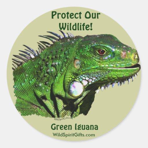 Green Iguana Collection Classic Round Sticker