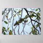 Green Iguana in Tree Twigs Posters