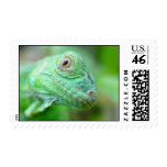Green Iguana Lizard Reptile On Leaf Stamps