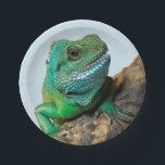"Green iguana paper plate<br><div class=""desc"">The green iguana (Iguana iguana), also known as the American iguana, is a large, arboreal, mostly herbivorous species of lizard. This is largest lizards in the Americas, averaging around 6.5 feet long and weighing about 11 pounds. They are also among the most popular reptile pets in the United States. Iguanas...</div>"