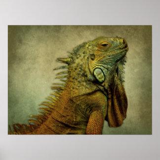 Green Iguana Posters