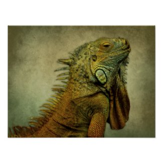 Green Iguana Posters