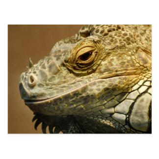 Green iguana resting postcard