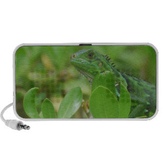 Green Iguana Travel Speakers