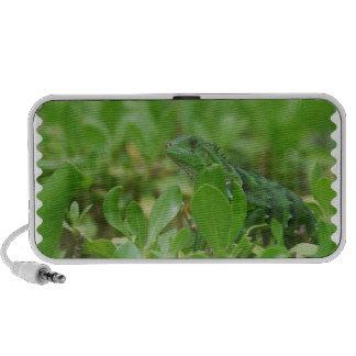 Green Iguana Mp3 Speakers