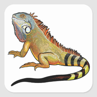 green iguana square sticker