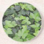 Green Ivy Botanical Print Sandstone Coaster
