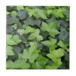 Green Ivy Botanical Print Tile