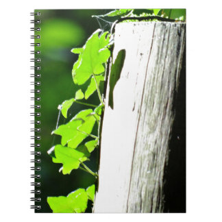 Green ivy leaves at a tree trunk spiral note books