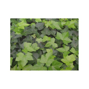 Art Themed Green Ivy Wood Poster