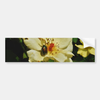 Green Japanese Beetle on Yellow Rose floral Bumper Sticker