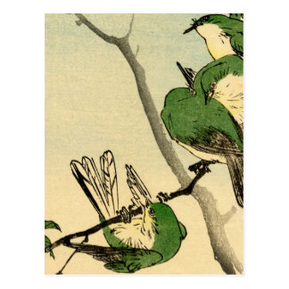 Green Japanese Sparrows no.1 Postcard