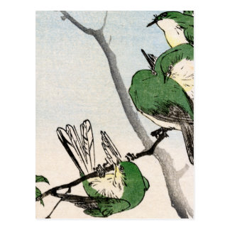 Green Japanese Sparrows no.2 Postcard