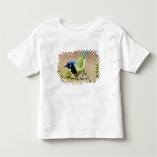 Green Jay Cyanocorax yncas) adult perched in Toddler T-shirt