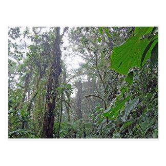 green jungle in costa rica postcard