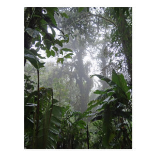 green jungle postcard