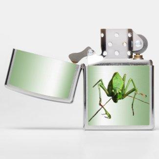 Green Katydid Animal Insect