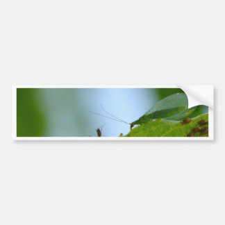 Green Lacewing Aphid Buffet Bumper Sticker