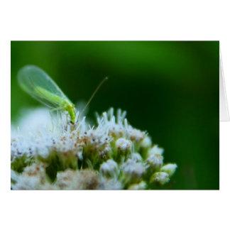 Green Lacewing on Boneset Flower Card