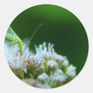 Green Lacewing on Boneset Flower Classic Round Sticker