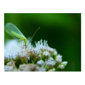 Green Lacewing on Boneset Flower Postcard
