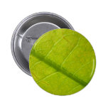 Green Leaf Abstract Nature Photography Button