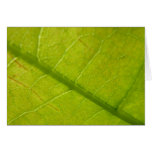 Green Leaf Abstract Nature Photography Card