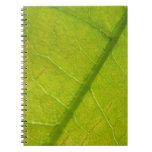 Green Leaf Abstract Nature Photography Notebook