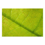 Green Leaf Abstract Nature Photography Photo Print