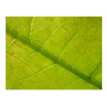 Green Leaf Abstract Nature Photography Postcard