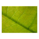 Green Leaf Abstract Nature Photography Poster