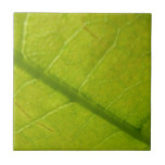 Green Leaf Abstract Nature Photography Tile