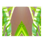 Green Leaf Abstract. Postcard