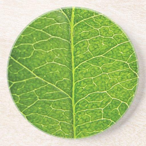 green leaf beverage coaster