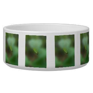 Green Leaf Blurred Background; No Greeting Bowl