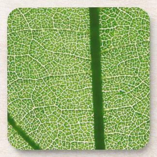 Green Leaf Close Up Coaster