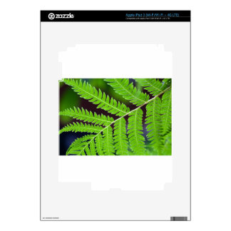 Green Leaf Closeup Skin For iPad 3