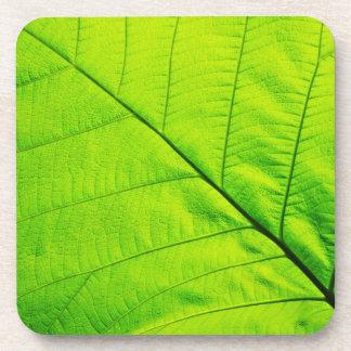 Green Leaf Coasters