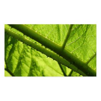 Green Leaf, focused on spiny center. Business Card