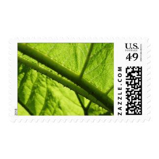 Green Leaf, focused on spiny center. Postage