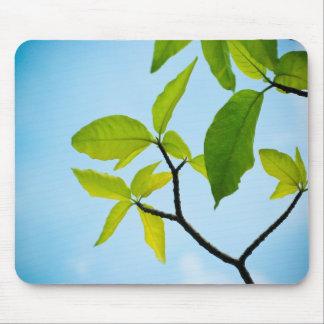 Green Leaf (FreeWallpaperBlog.com) Mouse Pad