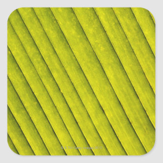 Green Leaf in a Botanical Garden 3 Square Sticker